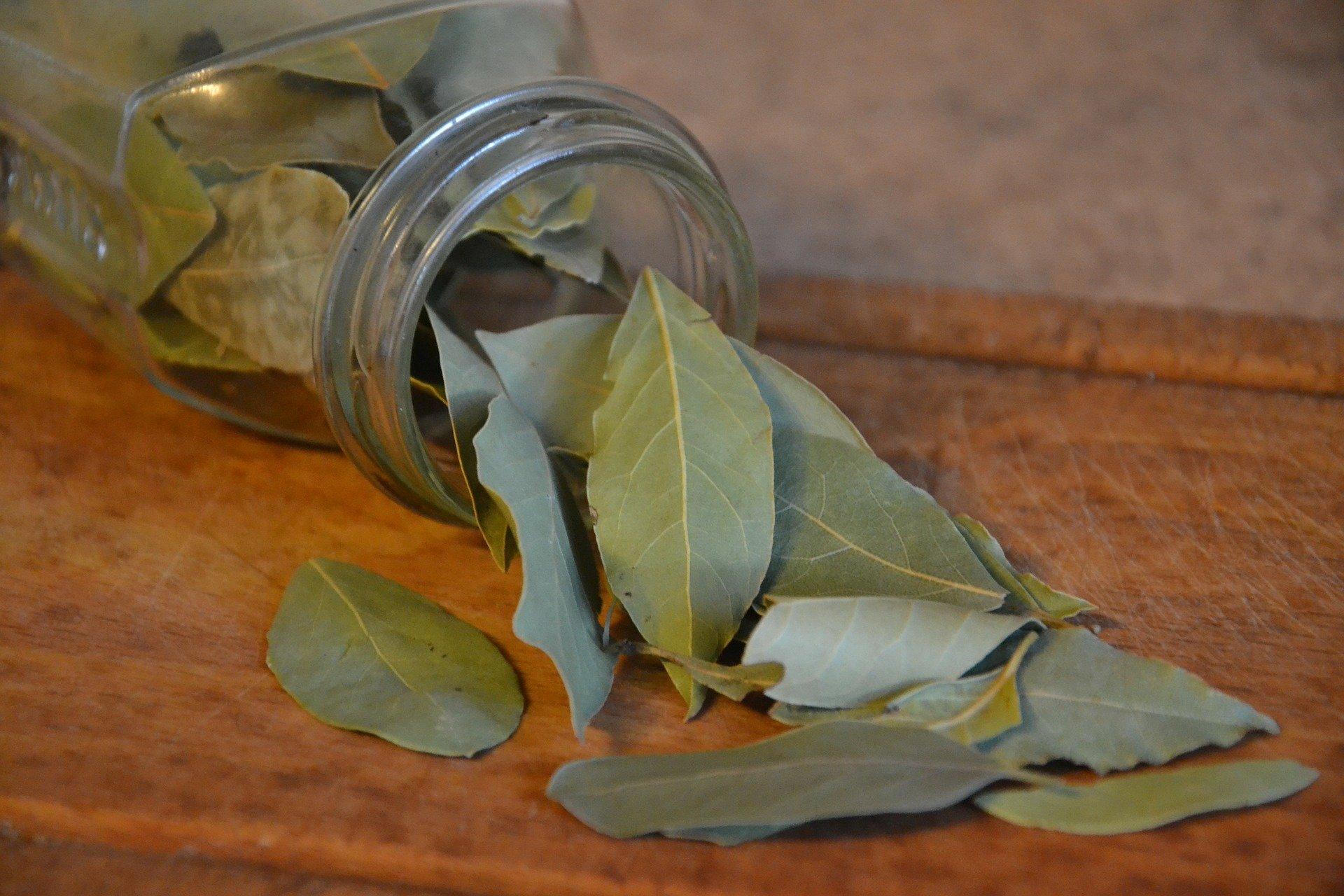 Jak si doma vypěstovat bobkový list