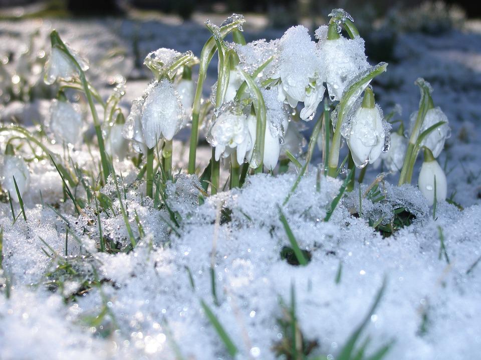 První náznaky přicházejícího jara
