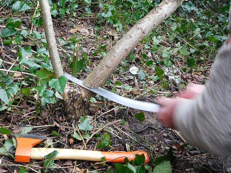 Výběr vhodné pilky na prořez stromků
