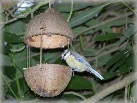 Krmítko z kokosu