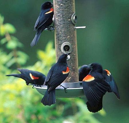 krmítko pro ptáčky 2